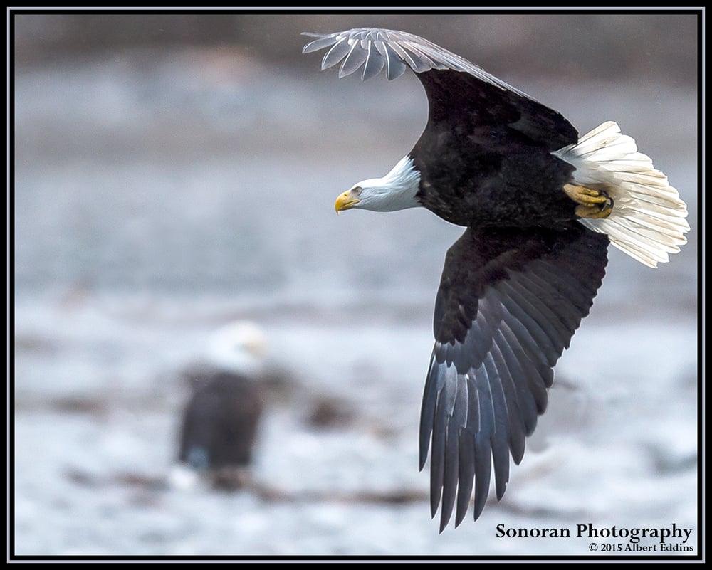 Rendezvous on the Nooksack River - Washington
