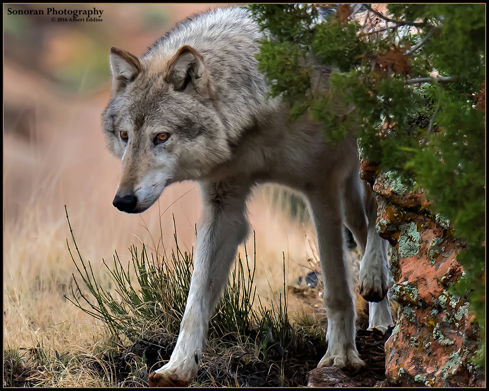 Grey Wolf Scouting - Colorado
