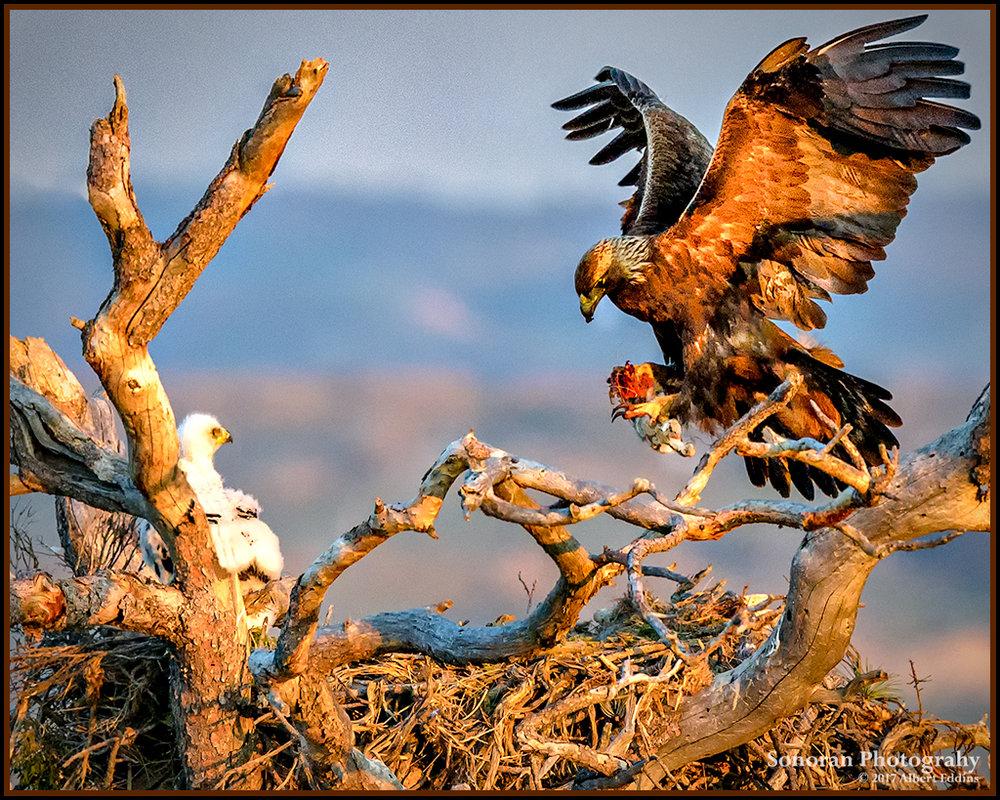 Golden Eagle - Lusk, Wyoming