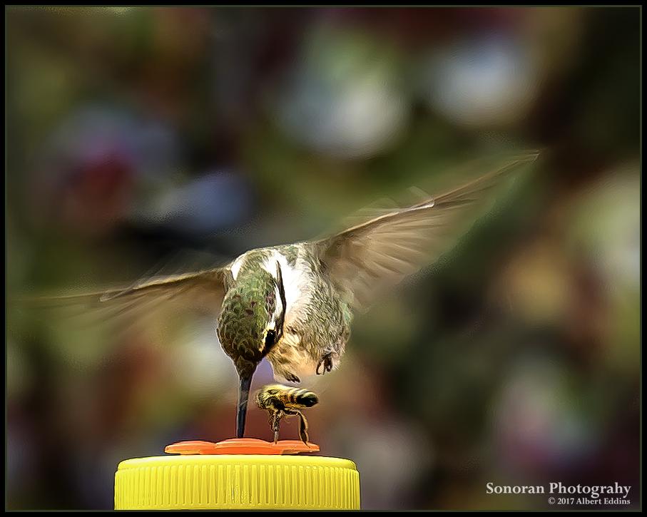 Hummingbird and Barfly_Tiff_ASE2713.jpg
