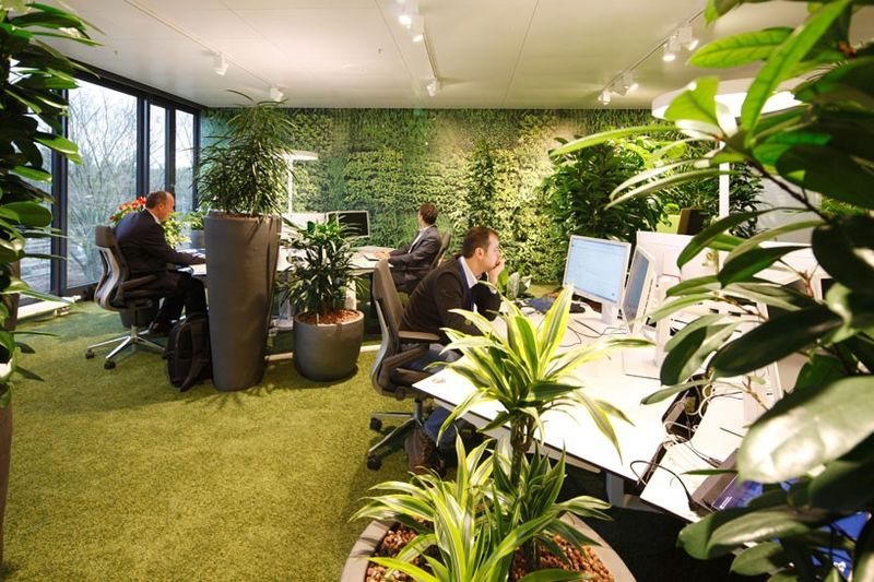 The thought of a plant at your desk has now turned offices into green houses...gardens.. jungles?....