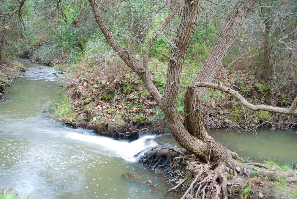 TreeinStream.jpg