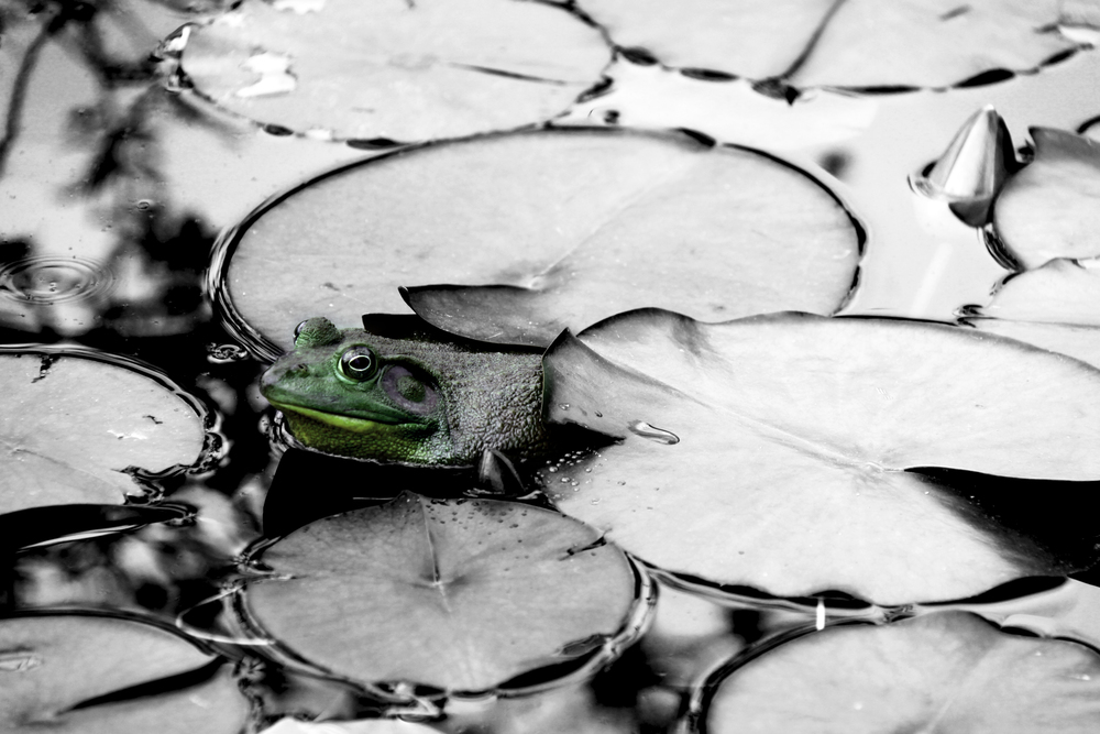 Lily Pad Green.jpg