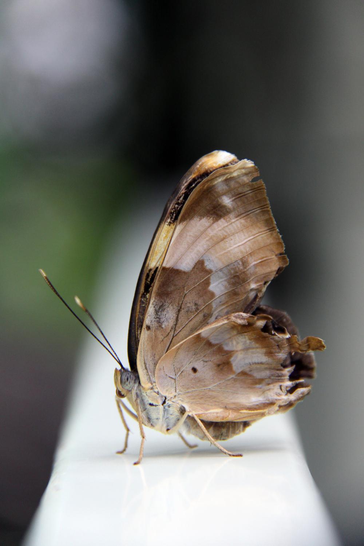 Butterfly III.jpg