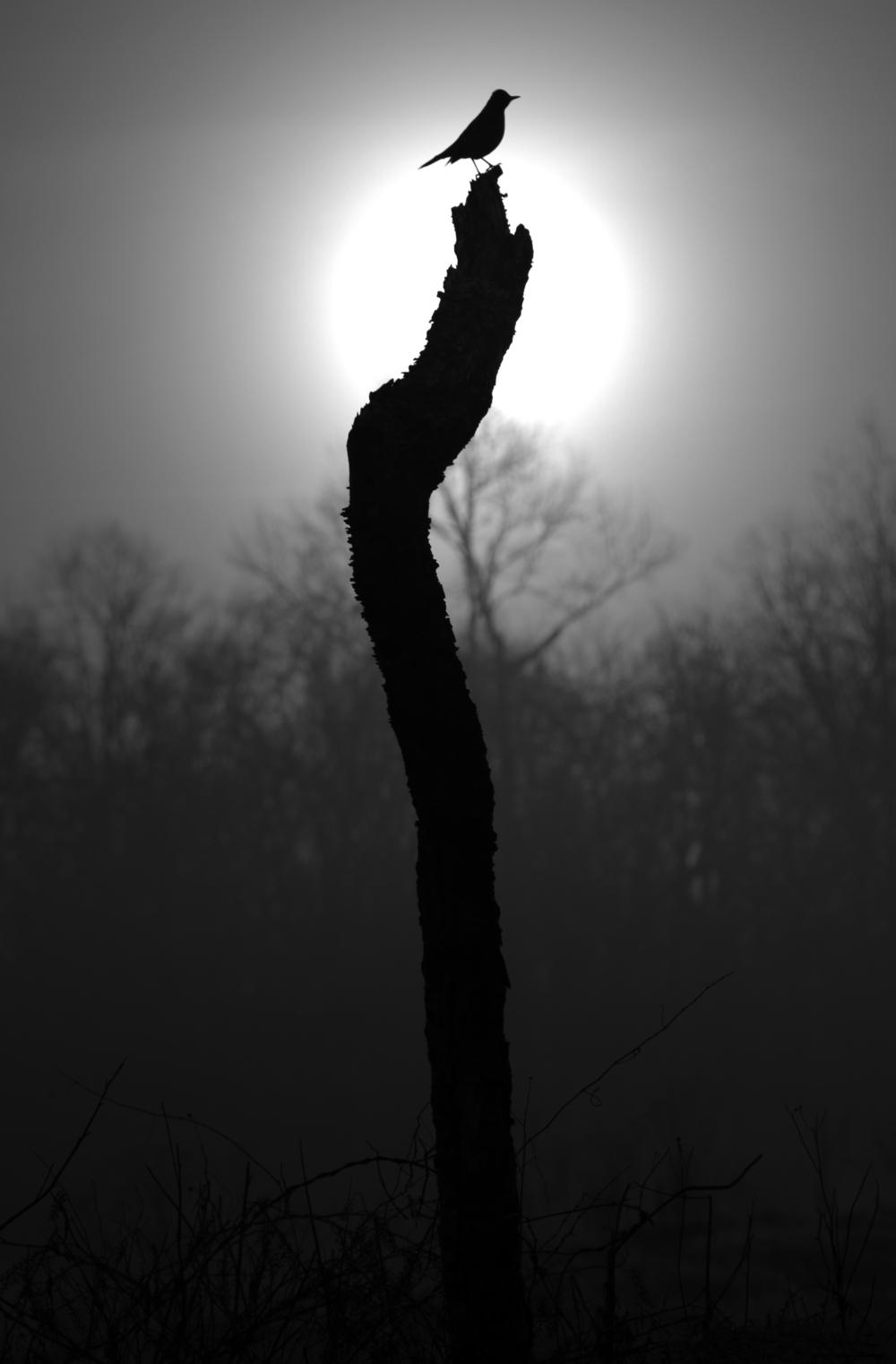 Bird Silhouette.jpg
