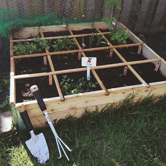 Verbouw je eigen groenten in een zelfgemaakte moestuinbak! -