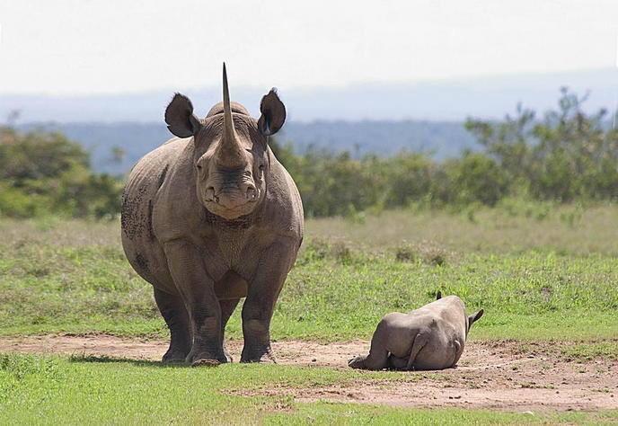 Rhino family.