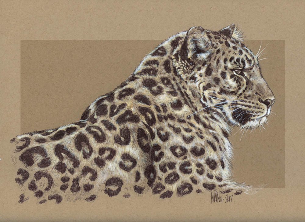 """Amur Leopard"" by  Manny Carrasco  (pen and white ink)"
