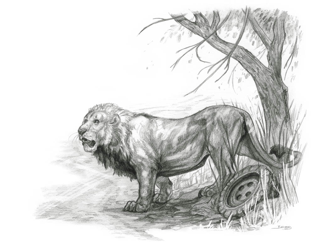 """""""Road Warrior"""" by  Brynn Metheney  (pencil and gouache)"""