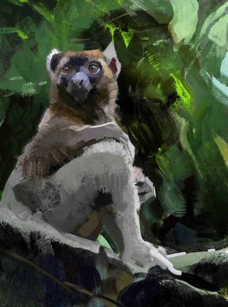 """""""Lemur Study"""" by  John Park  (Digital)"""