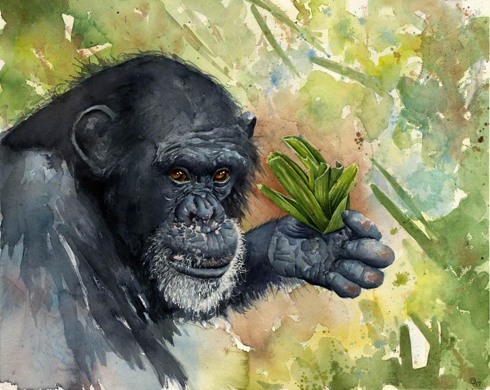 """Chimpanzee"" by  Charity Oetgen  (watercolor)"