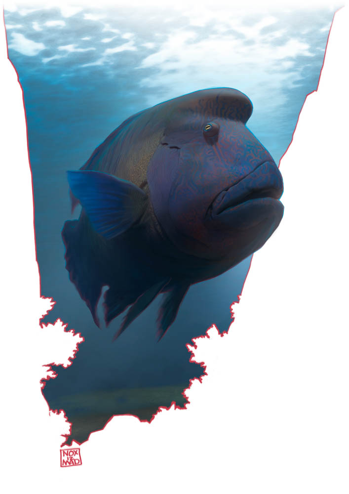 """Humphead Wrasse"" by  Bruno Gore  (digital)"