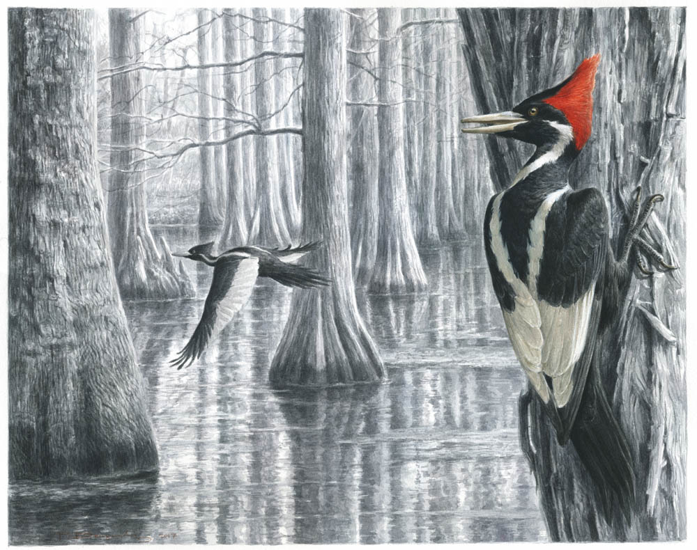 """Swamp Ghost"" by  Paschalis Dougalis  (watercolours on LANA Cold pressed 300 g/m² paper)"