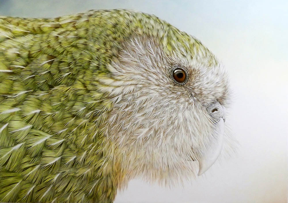 """Kakapo, One of 154"" by  Janet Luxton  (oil on Belgian linen)"