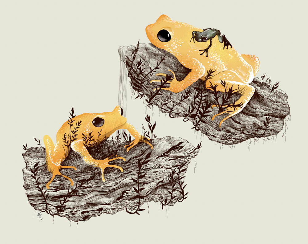 """Kihansi Spray Toads"" by  Dave Mottram  (digital)"