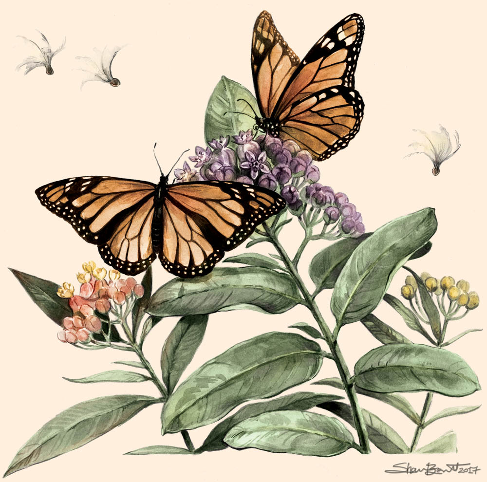 """Monarchs & Milkweeds"" by  Shannon Beaumont  (Ink & digital)"