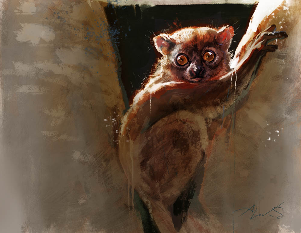 """Northern Sportive Lemur"" by  Aleksi Briclot  (Traditional & Digital)"