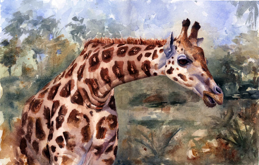 """Rothschild's Giraffe"" by  Charity Oetgen  (Watercolor)"