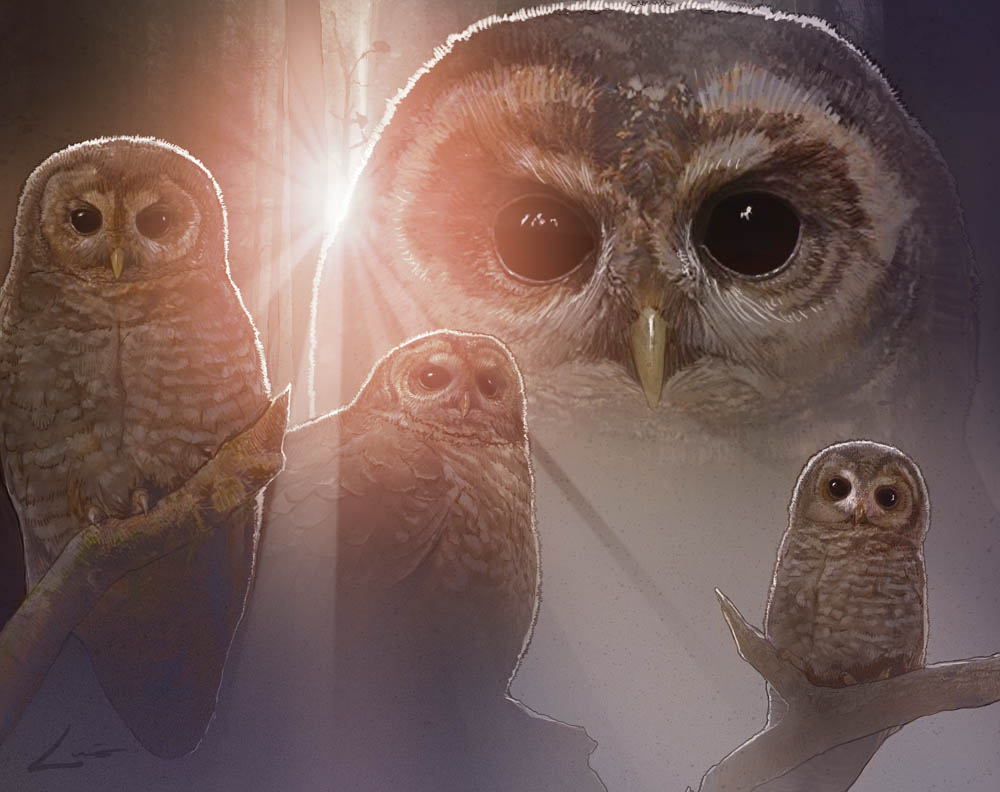 """The Spotted Owl"" by Luis Carrasco (digital)"