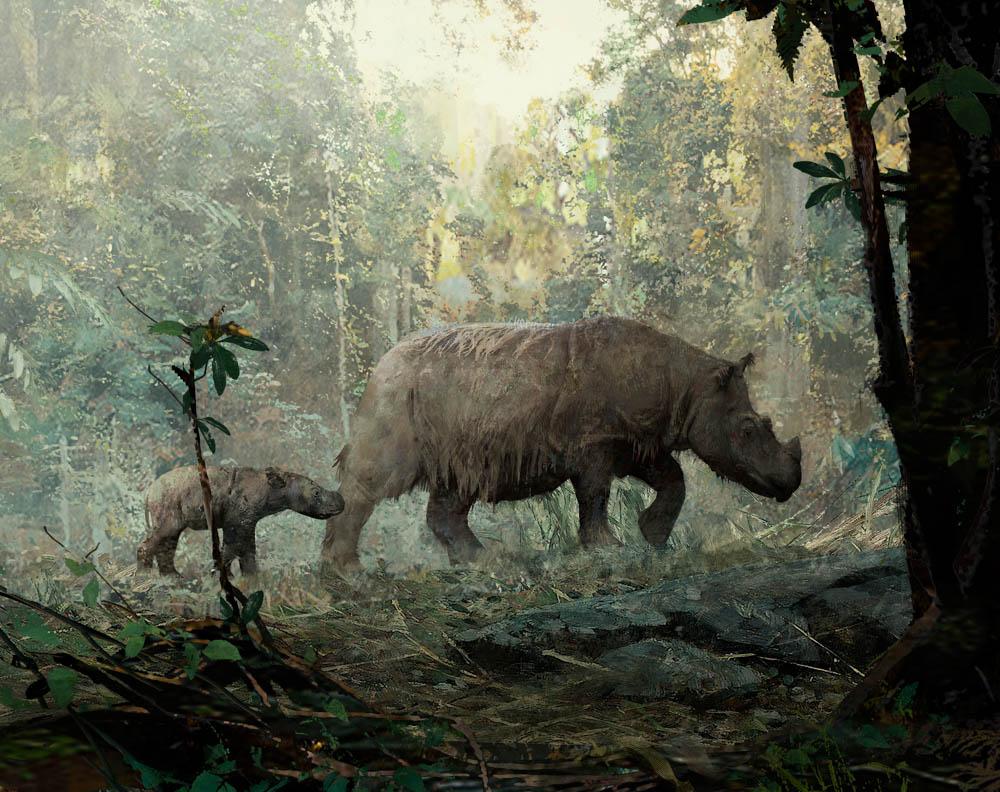 """Dicerorhinus Sumatrensis"" by  A.J. Trahan  (digital)"