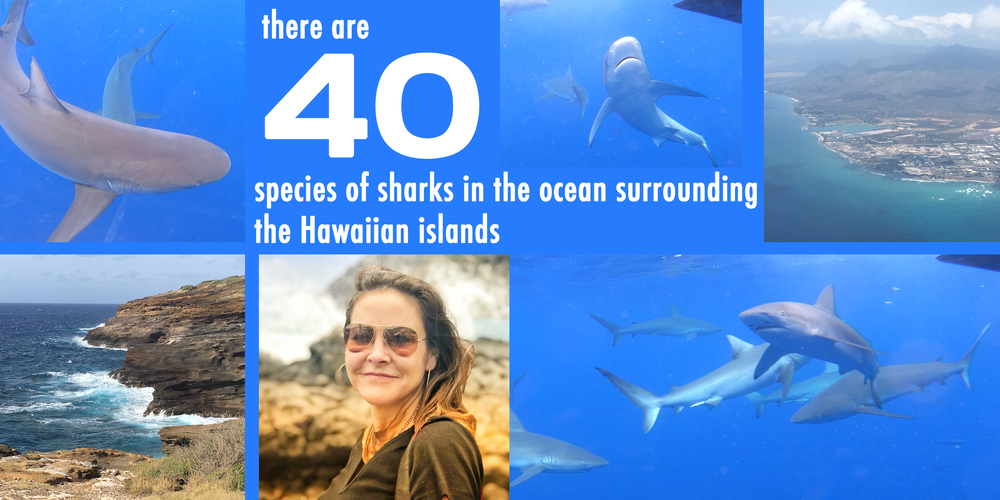 Galapagos shark image.png