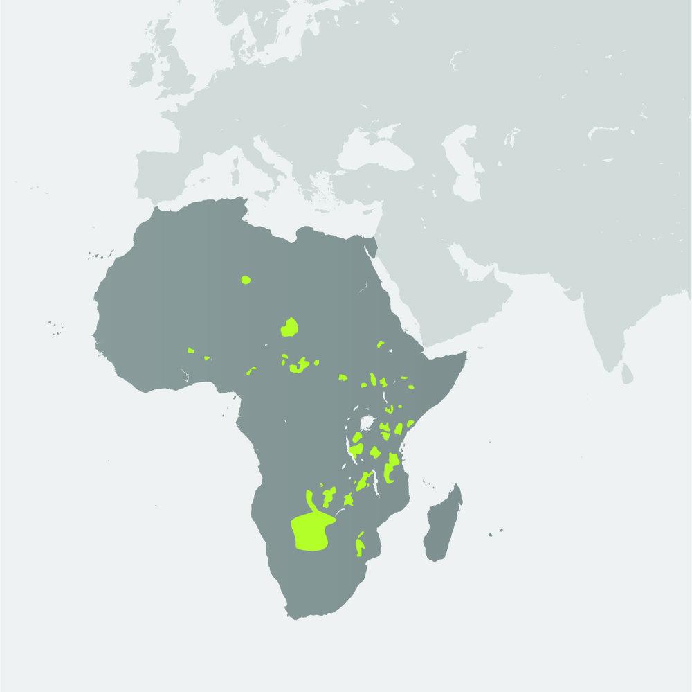Map__African Wild Dog.jpg