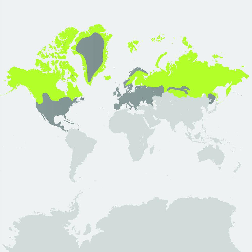 Map__Arctic Wolf.jpg