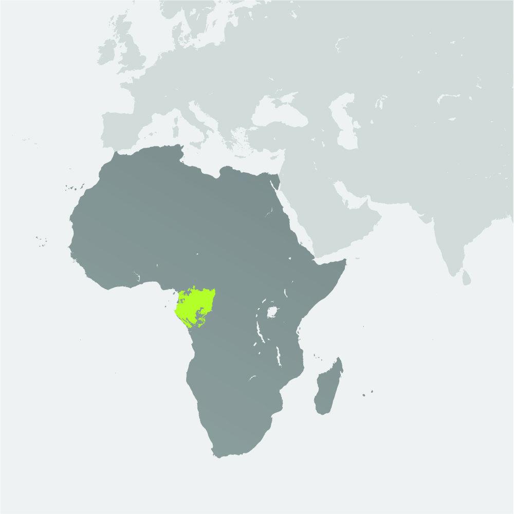 Map__Lowland Gorilla.jpg