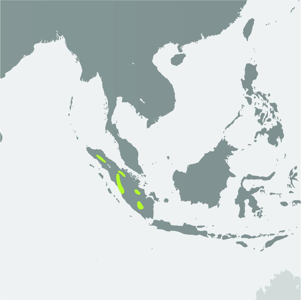 Map__Sumatran Tiger.jpg