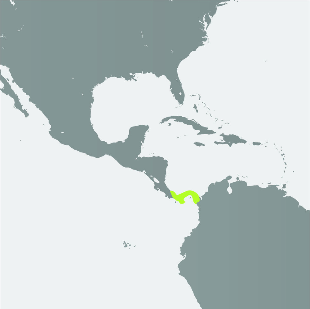 Map__Panamanian Golden Frog_1.jpg