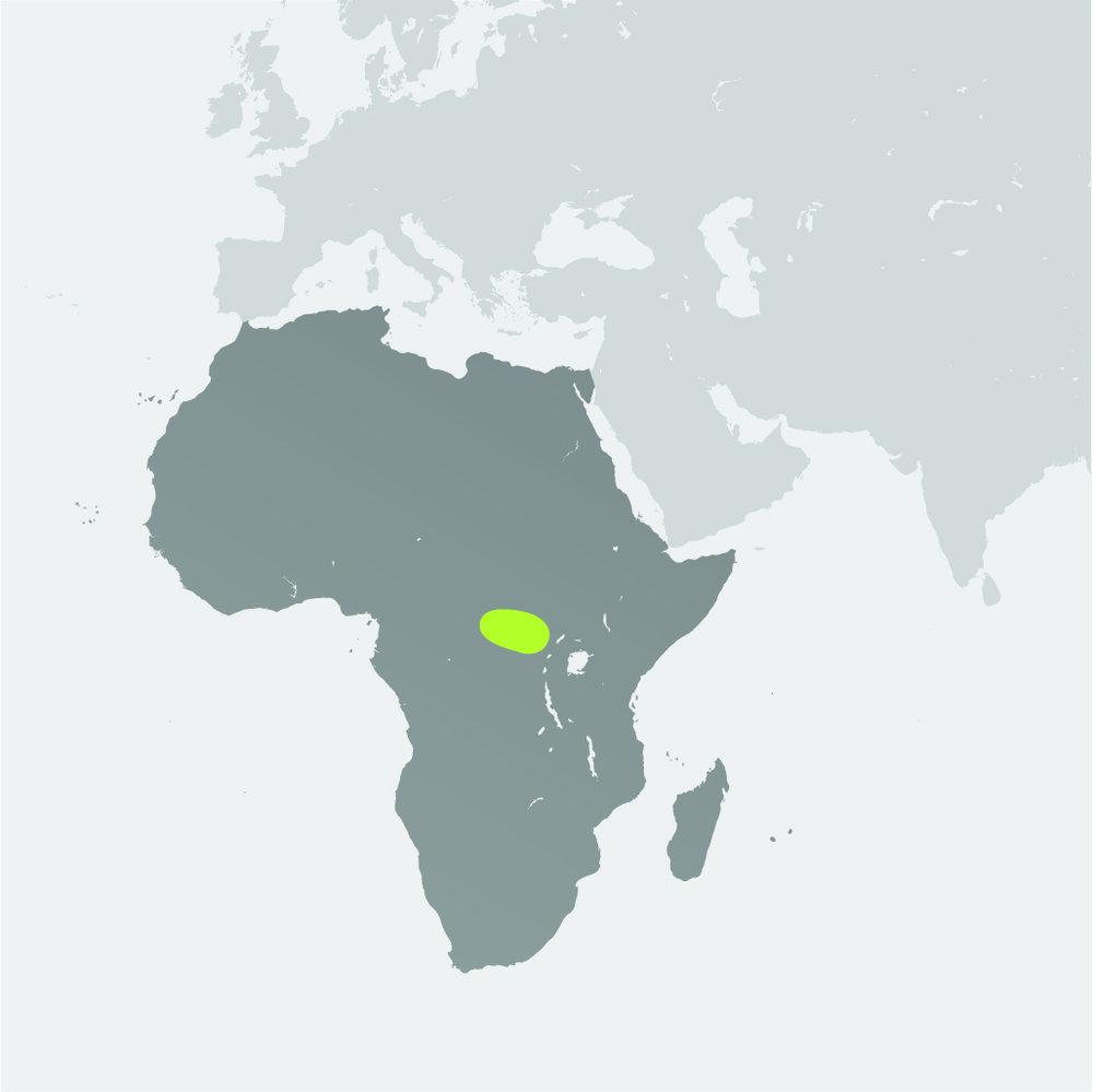 Map__Okapi.jpg