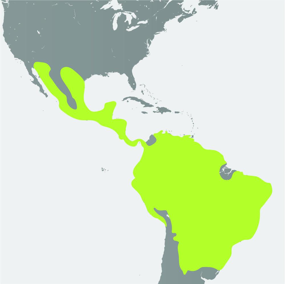 Map__Ocelot.jpg