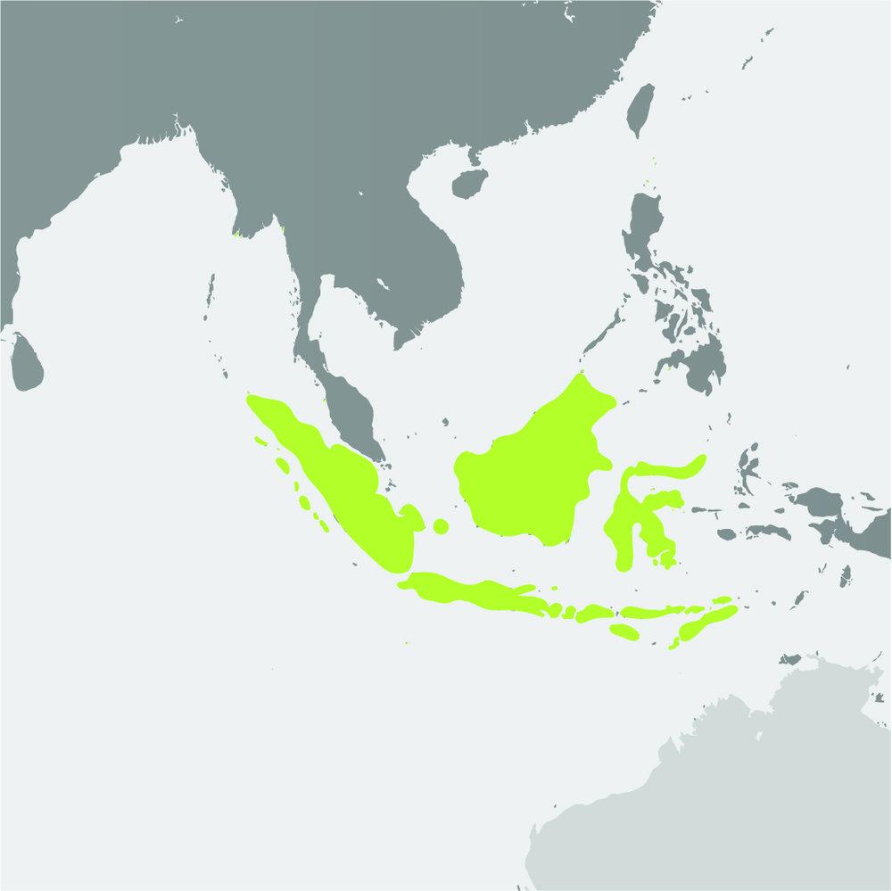 Map__Javan Rhino.jpg
