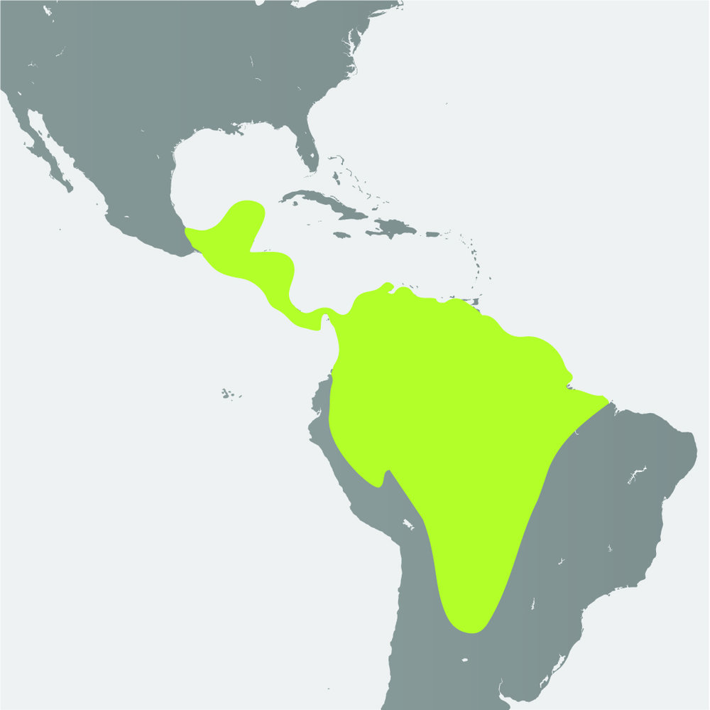 Map__Howler Monkey.jpg
