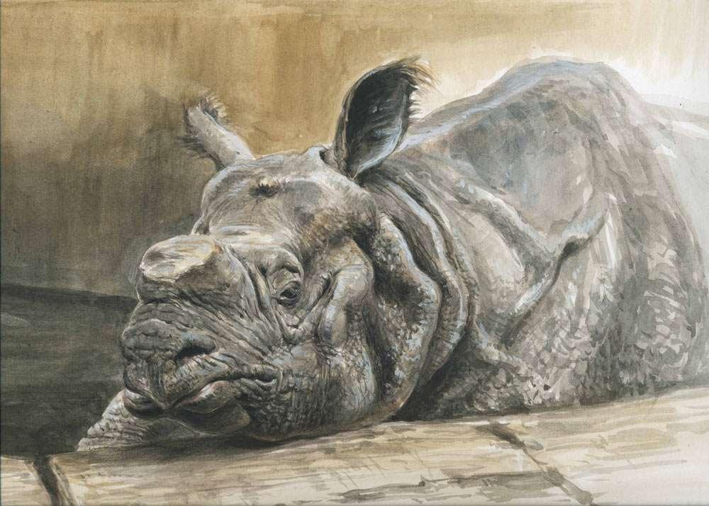 """""""Indian Rhino"""""""