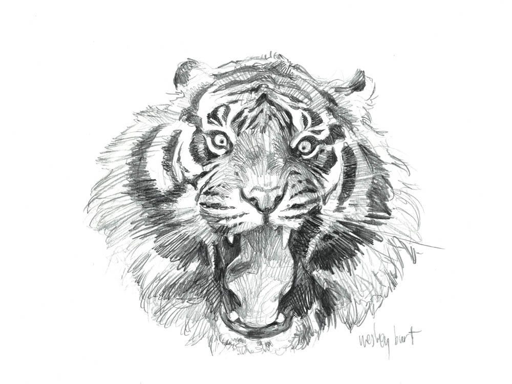 Sumatran Tiger (Face)