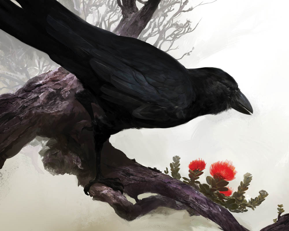 """Alala (Hawaiin Crow)"""