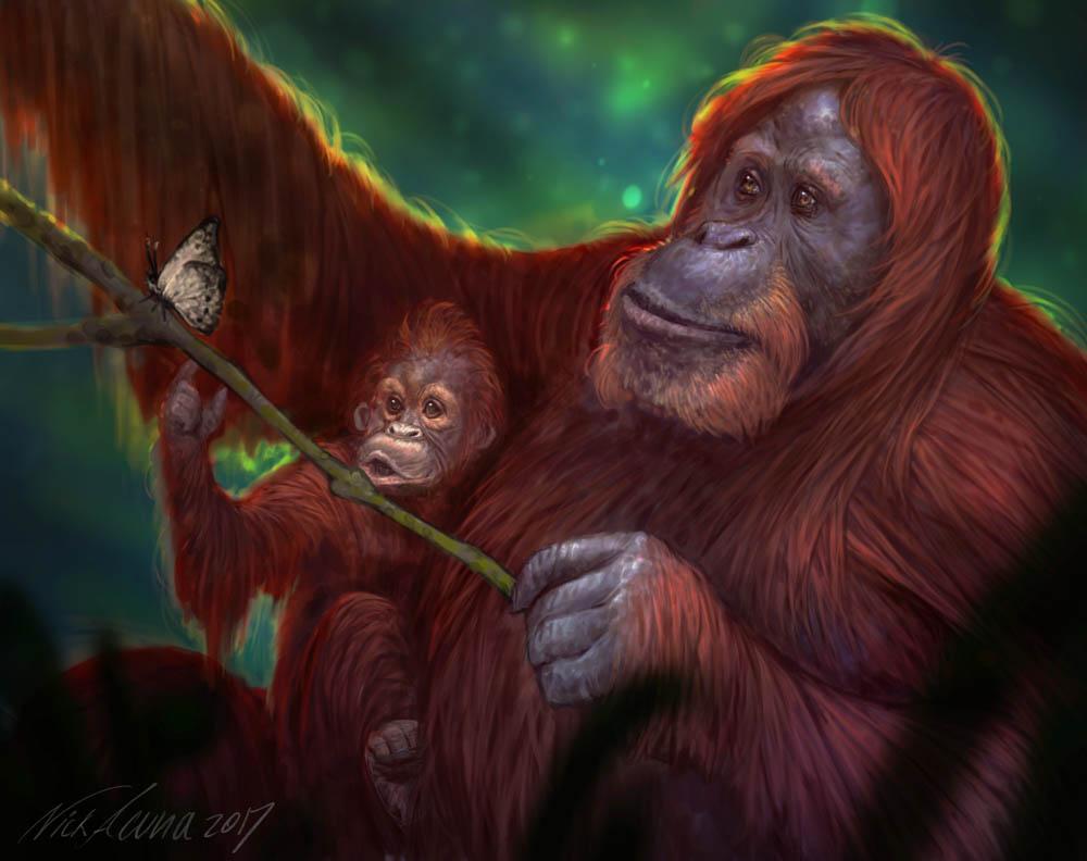 """""""Curiosity, Beauty and Hope"""" - Sumatran Orangutan"""