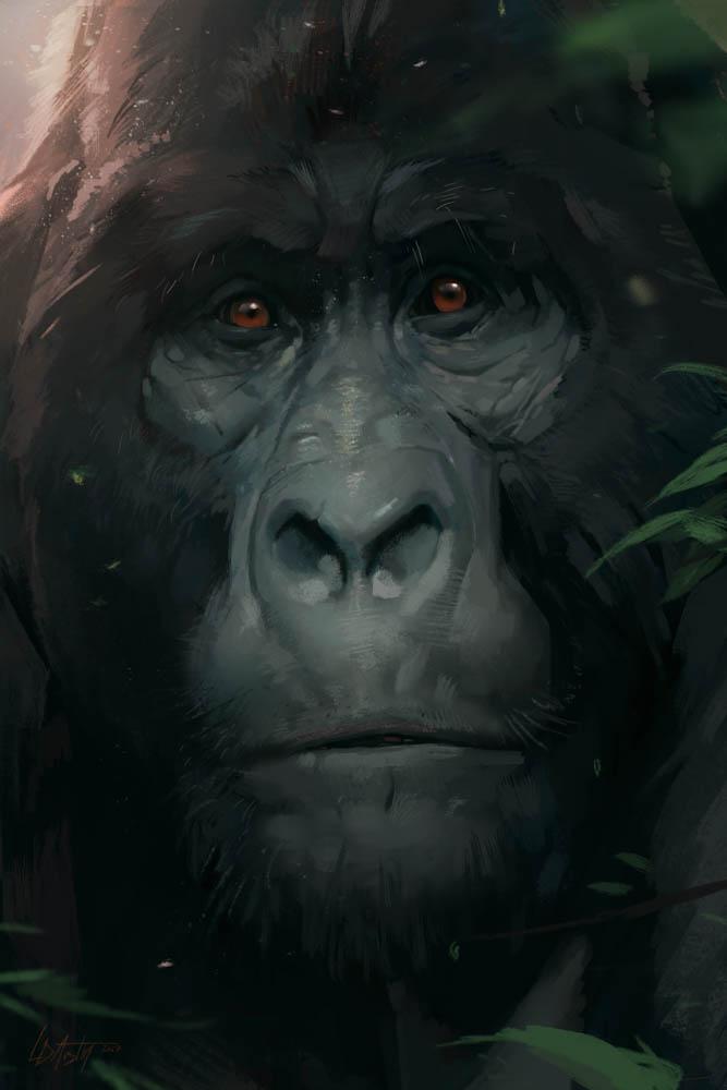"""""""Regard (Mountain Gorilla)"""""""