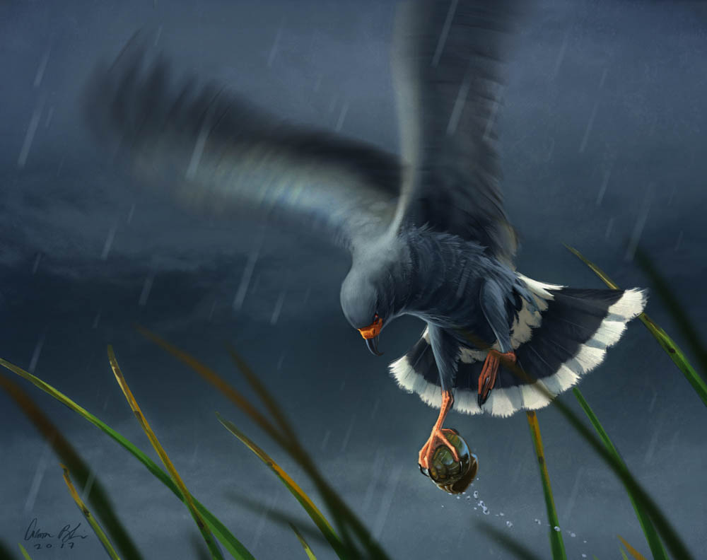 """Escargot (Snail Kite)"""