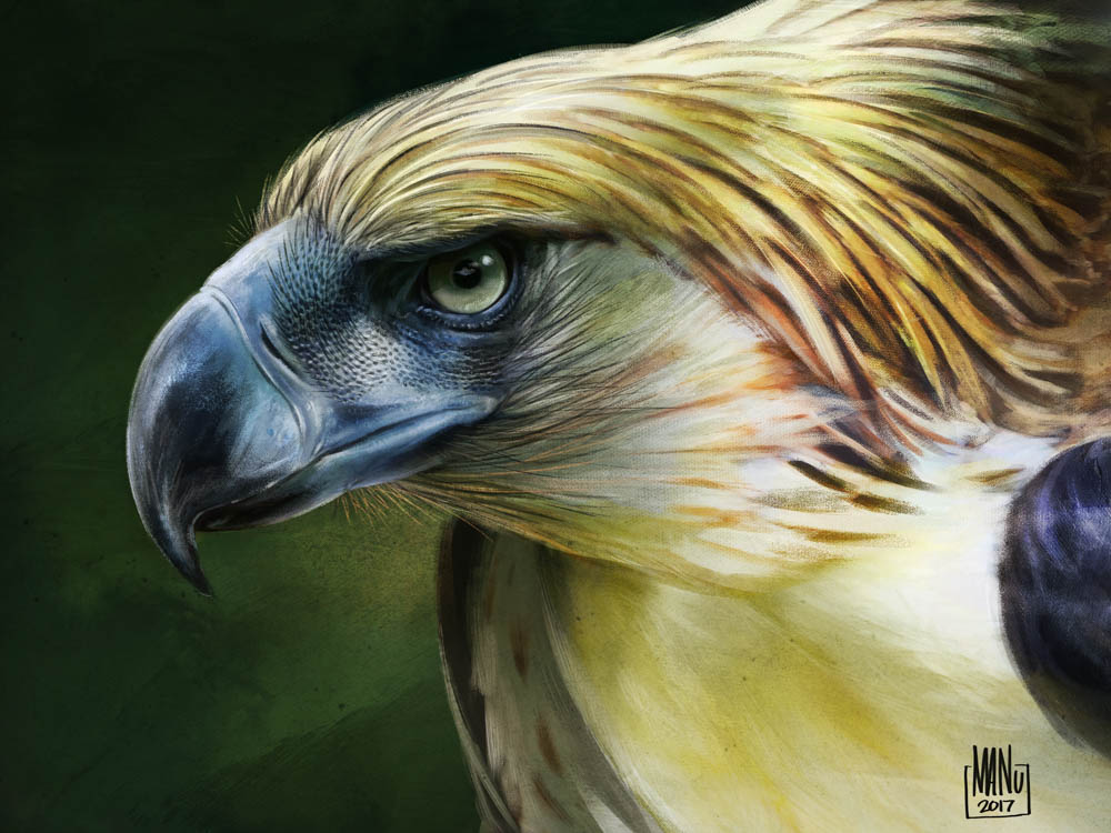 """""""Perseverance (Philippine Eagle)"""""""