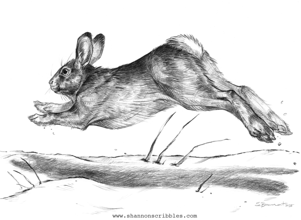 """Rabbit Run!"""