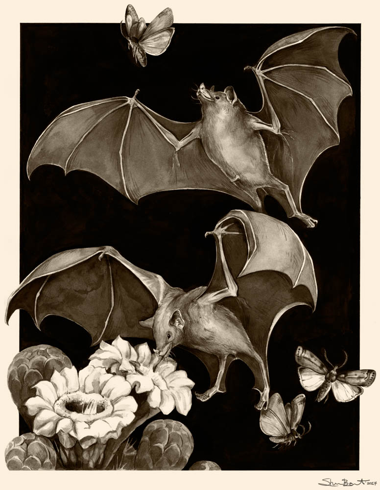 """Night Shift (Mexican Long-nosed Bat)"""