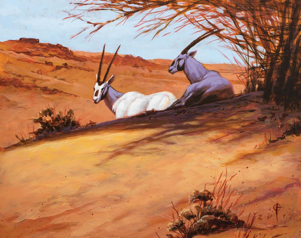 """Afternoon Shade (Arabian Oryx)"""