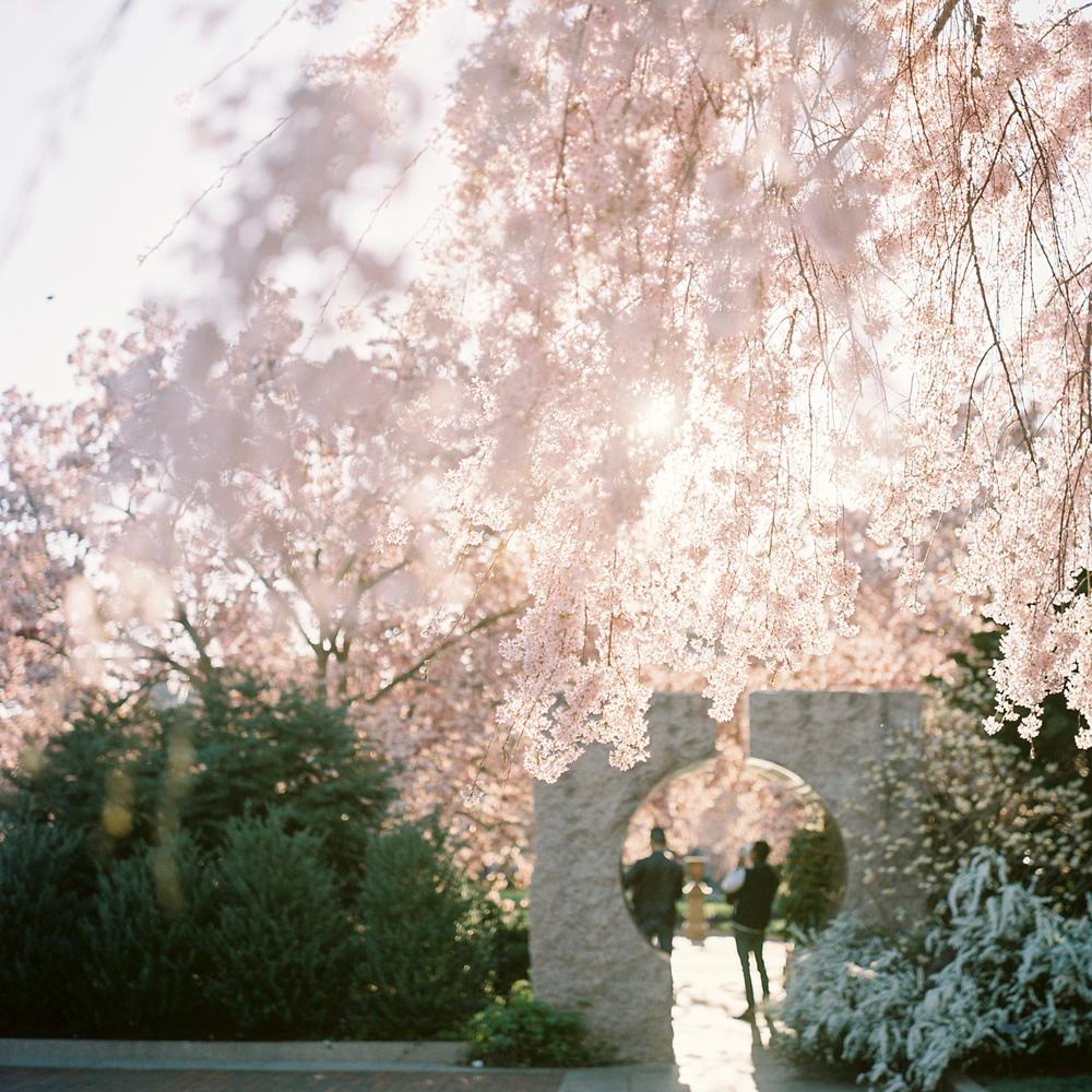 Rubescent Reverie #3 (pink cascade)