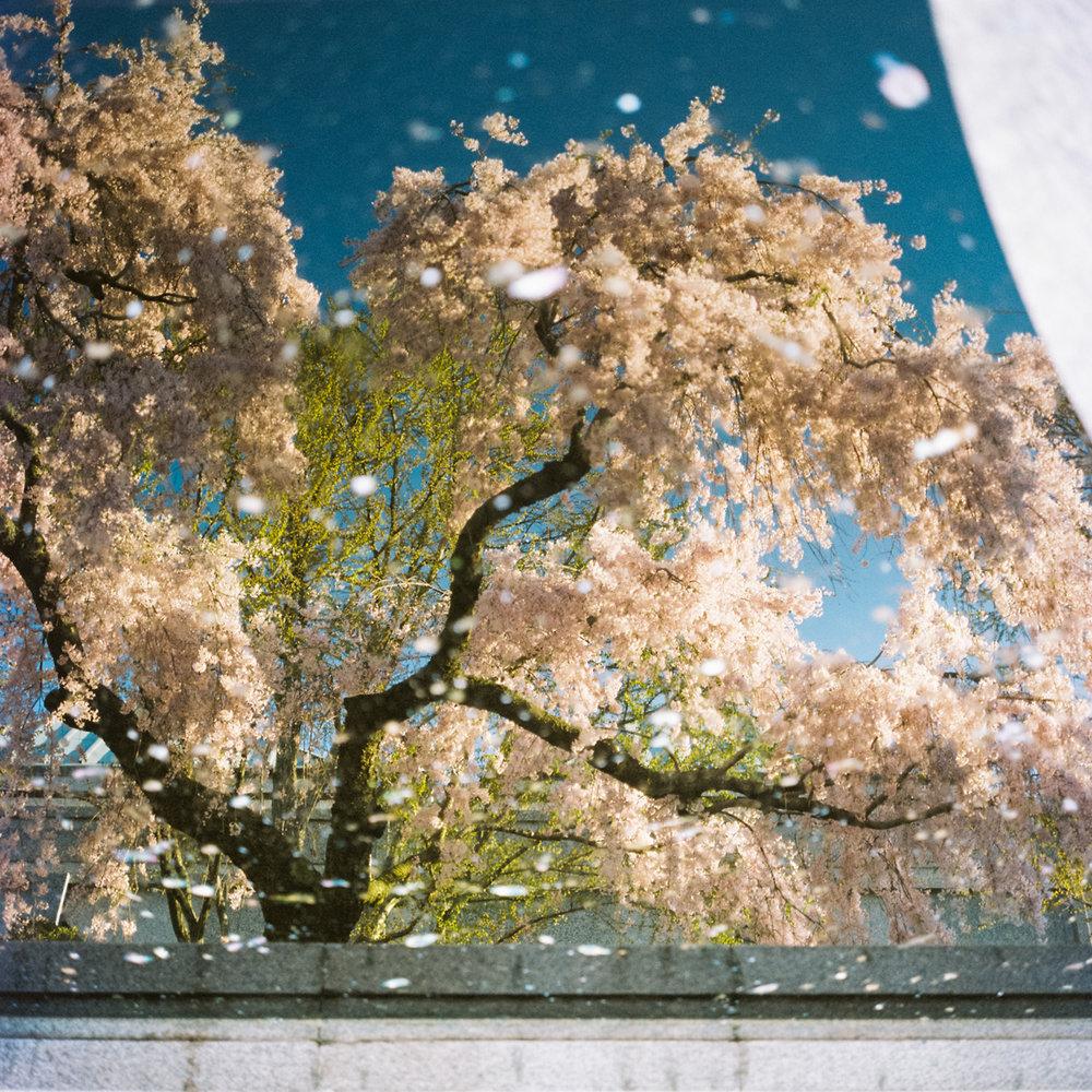 2015_spring_web-1.jpg