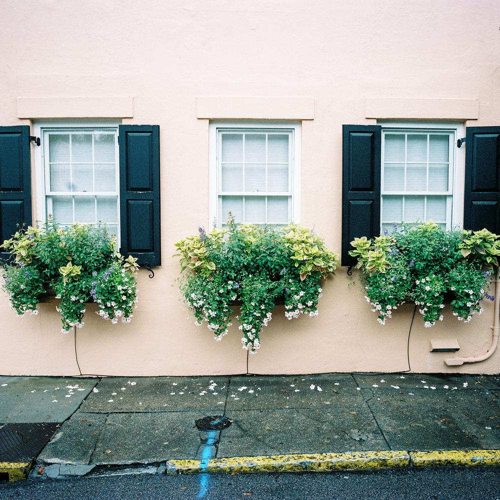 Flower Boxes, Charleston, SC, 2014