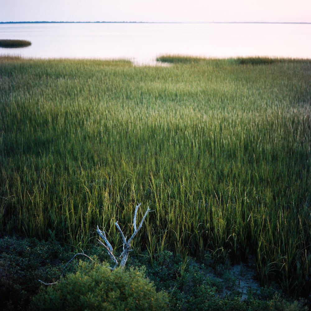 Wetland #2, Chincoteague, VA, 2016