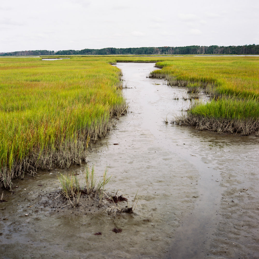 Wetland #1, Chincoteague, VA, 2016