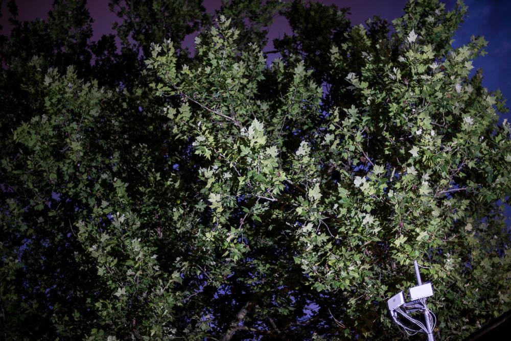 PJ Harvey by Edwina Hay-0191.jpg